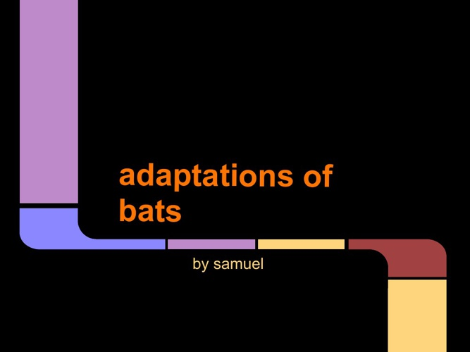 adaptations of bats