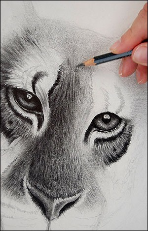 drawing_lion_470x300