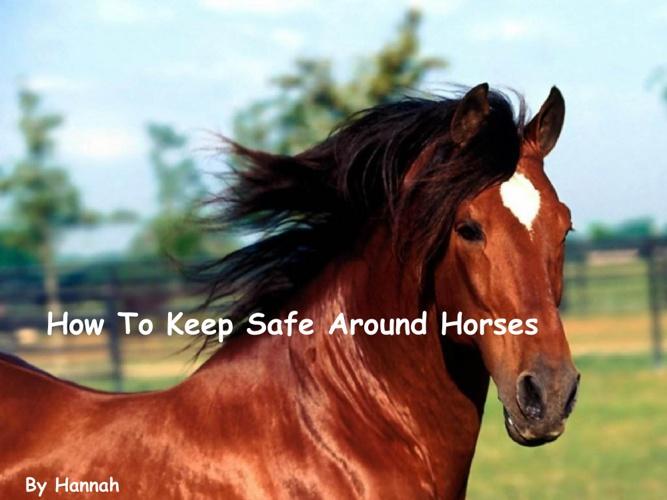 hannah horses book