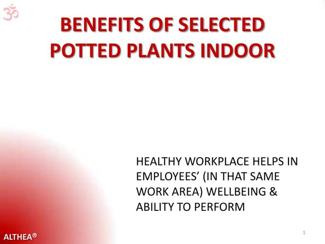 PottedPlantsBenefits