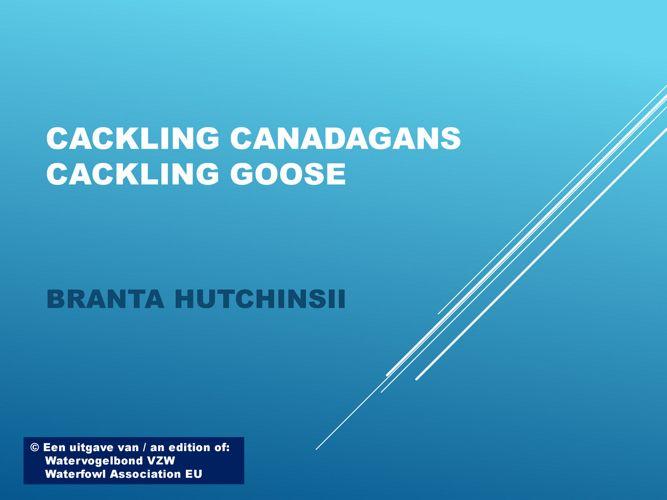 Cackling gans - Cackling goose