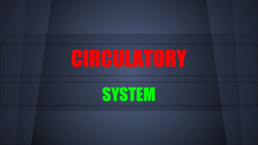 maddie CIRCULATORY SYSTEM