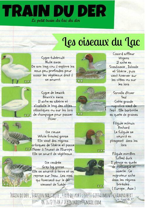 Les oiseaux du Lac du Der - Train du Der