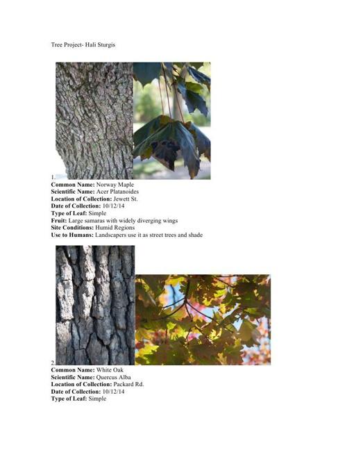 Hali Trees