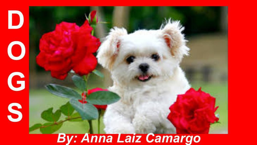 dogs by-anna laiz (1)