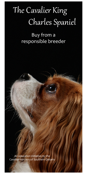 Cavalier Fanciers of SouthernON - Buy from a responsible breeder