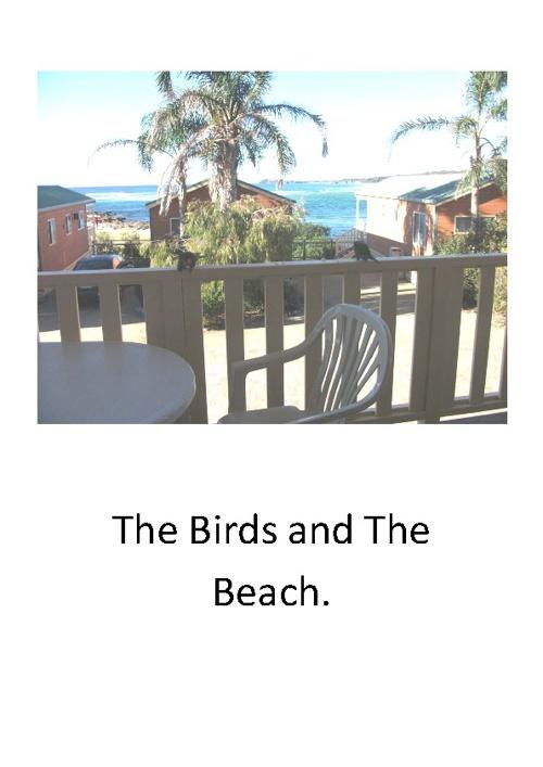 The Birds and The Beach