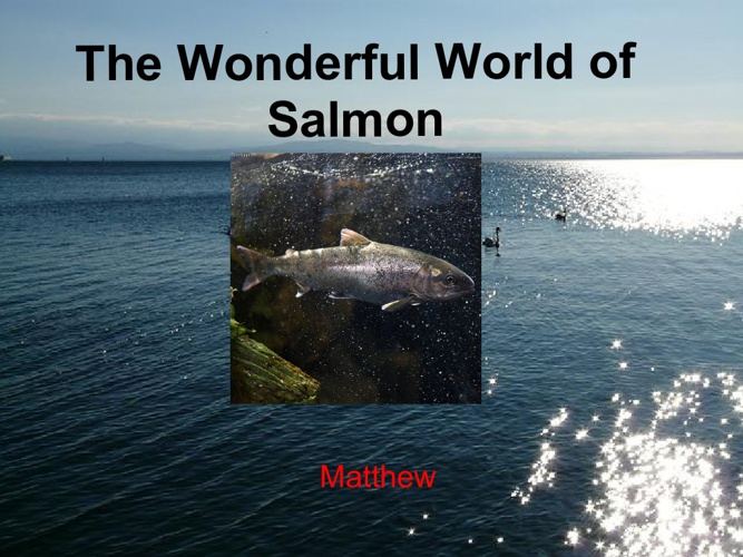 The Wonderful World of Salmon