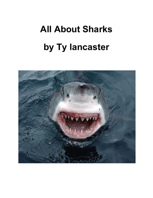 All About Sharks - Ty