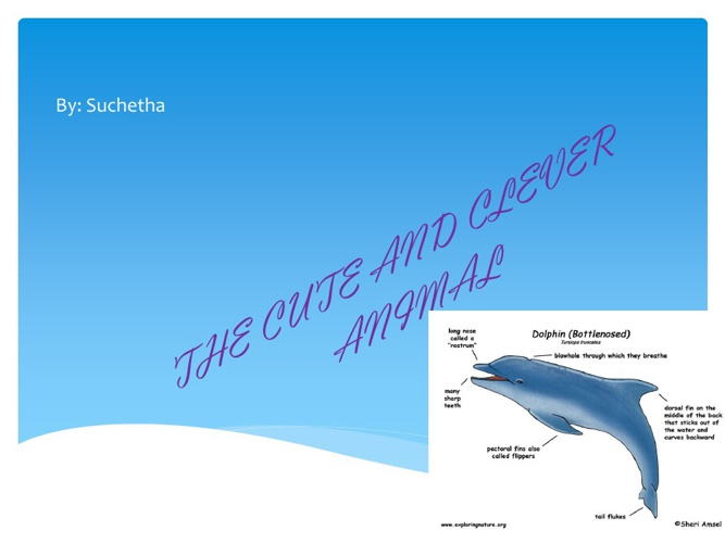 Suchetha -bottle nosed dolphin