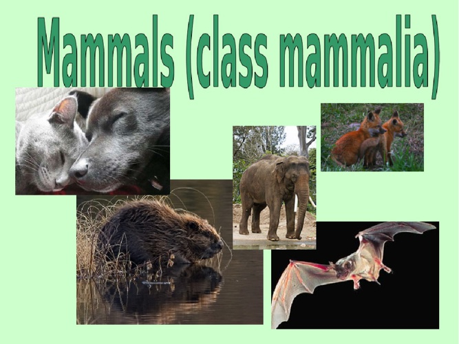 Mammals flip book