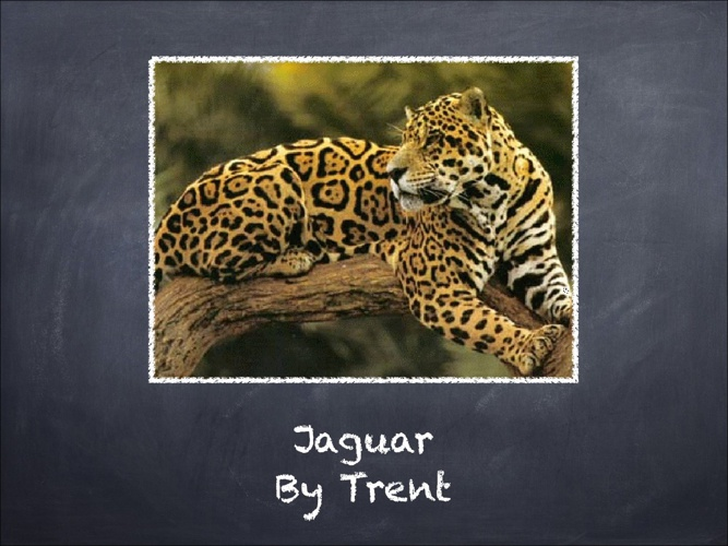 All About Jaguars