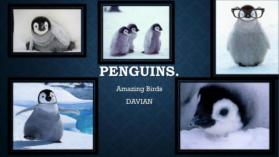 Penguin powerpoint By Davian