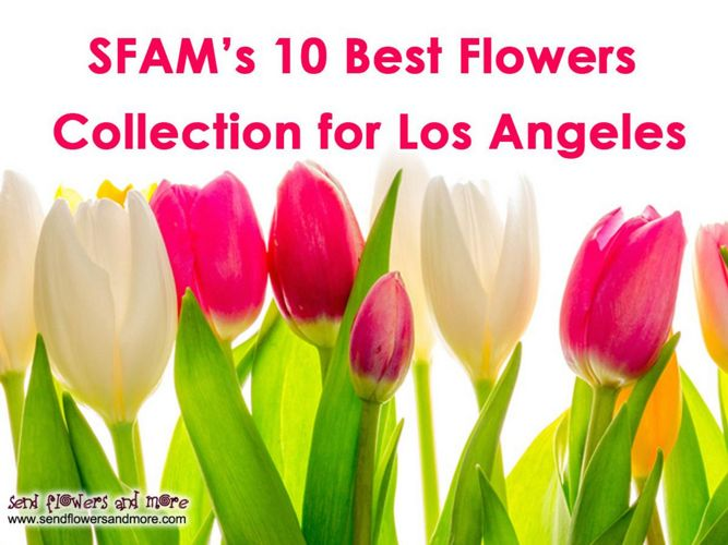 SFAM-10-best-flowers-collection-for-los-angeles
