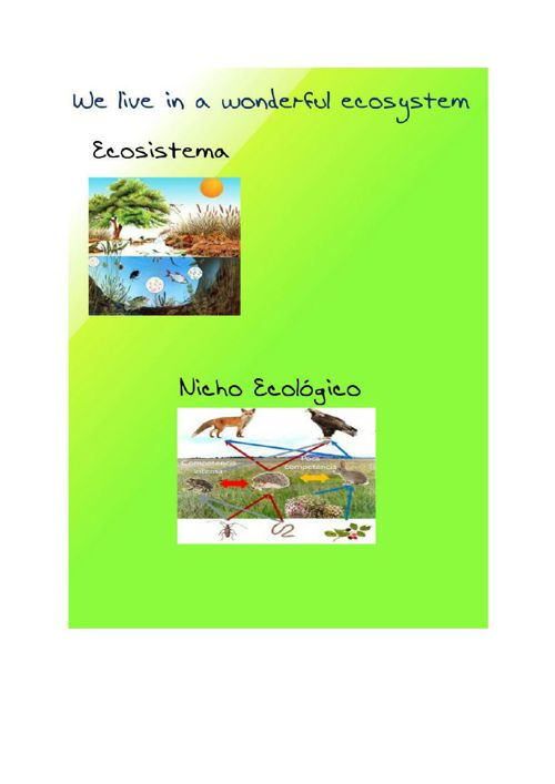 ELMARAVILLOSOEcosistema