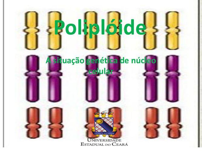 Poliplóide 2