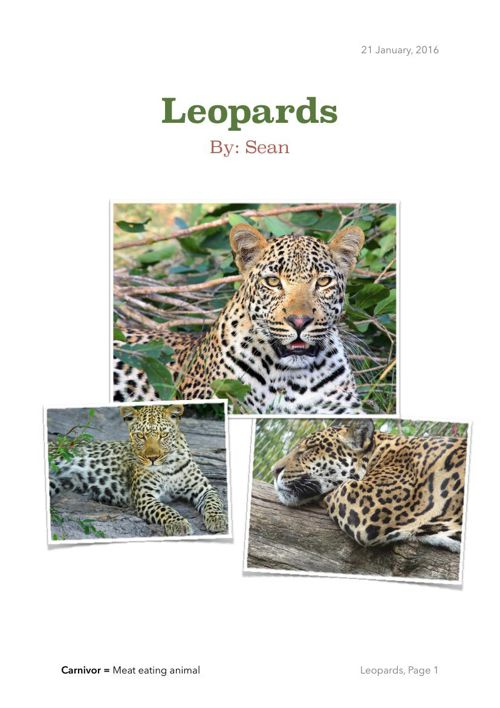 Leopards By Sean
