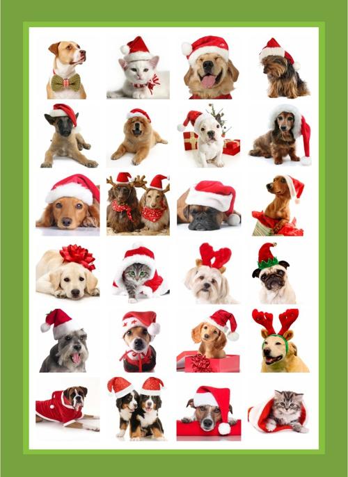 Sos Bichos Cartão de Natal