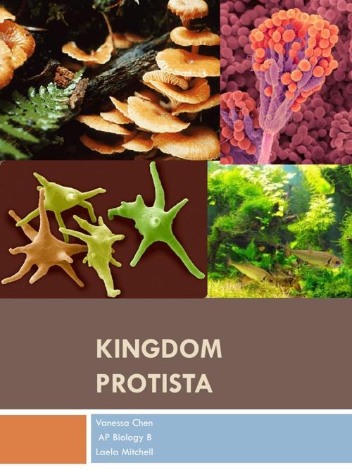 Kingdom Protista Project: Vanessa Chen AP Biology B