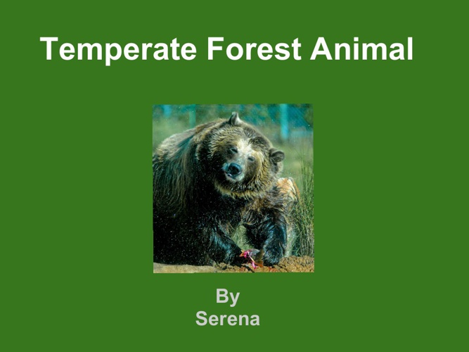 Serena Grizzly bear