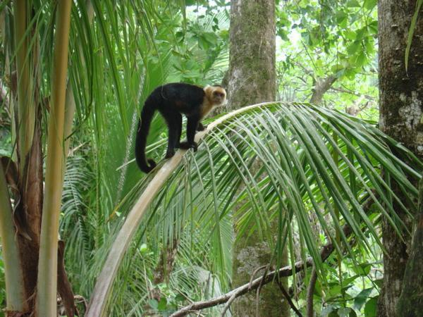 Những chú Khỉ