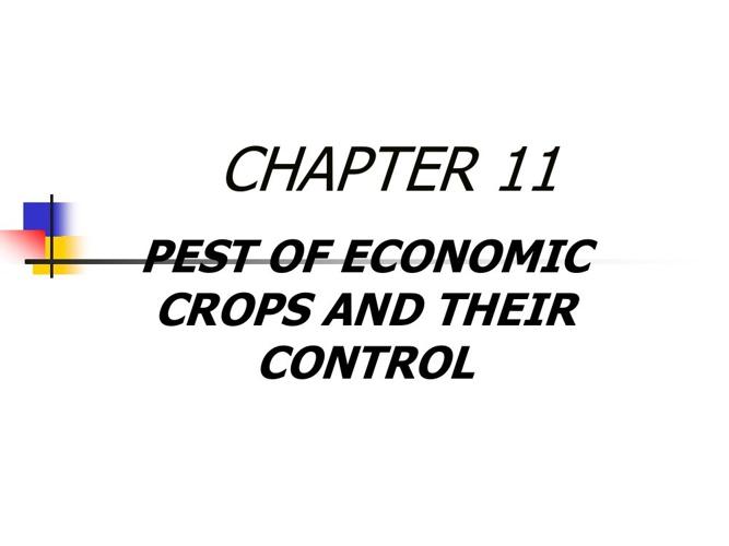ENTOMOLOGY: Chapter 11