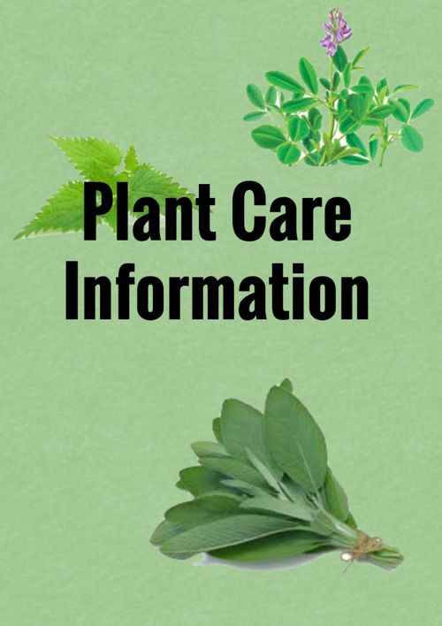 Plant Care Information