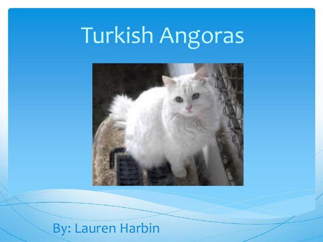 Lauren-Cats