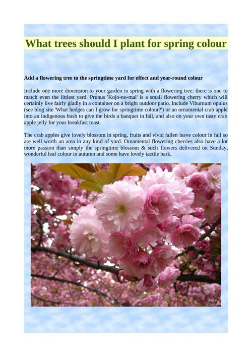 What trees should I plant for spring colour