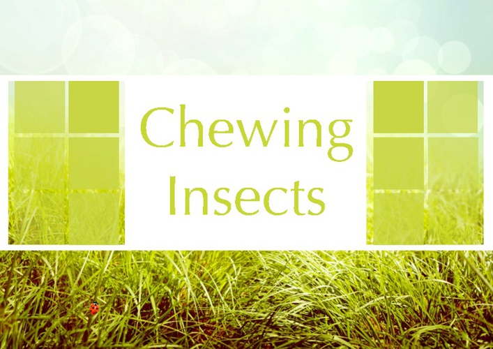 Chewing Insects