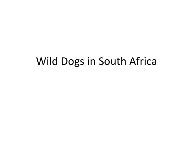 Wild Dogs in South Africa - Mack Prioleau