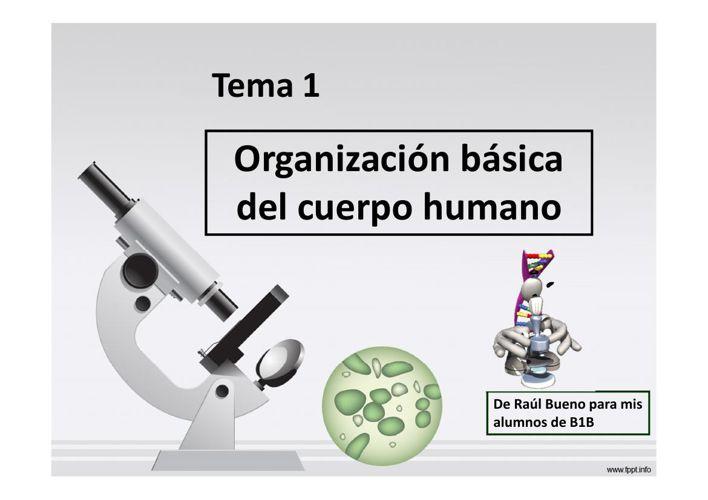 Tema 1. Organización del cuerpo humano