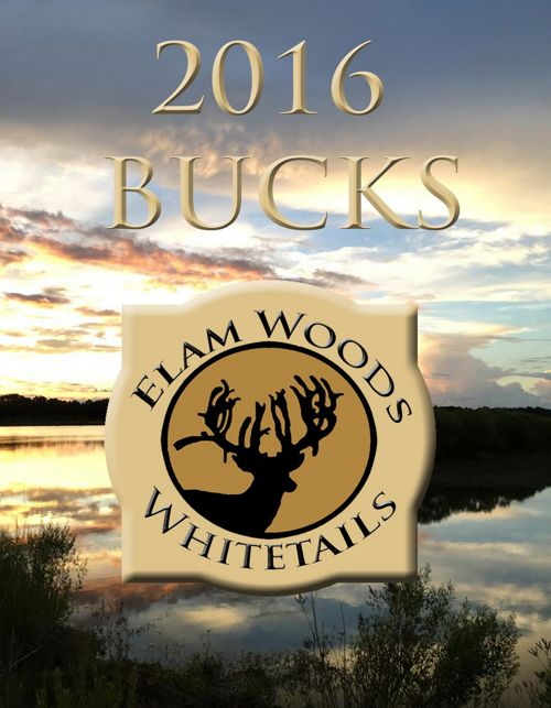Elam Woods Whitetails 2016 Bucks