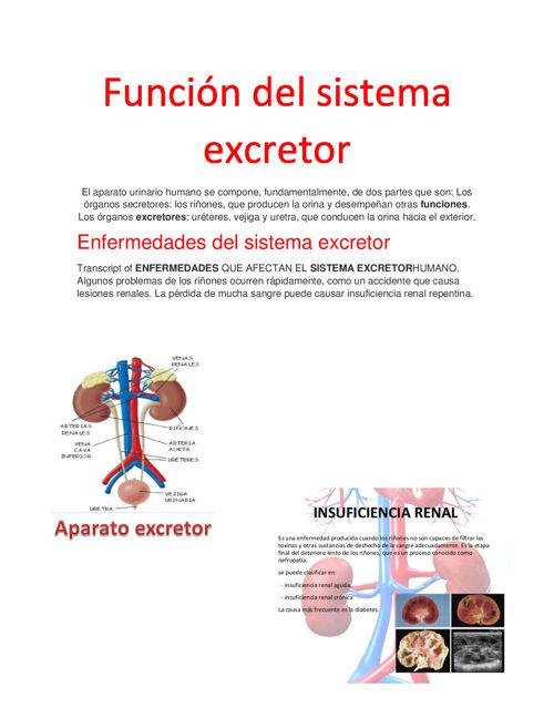 FUNCIÓN DEL SISTEMA EXCRETOR : ENFERMEDADES Y SUS FUNCIONES