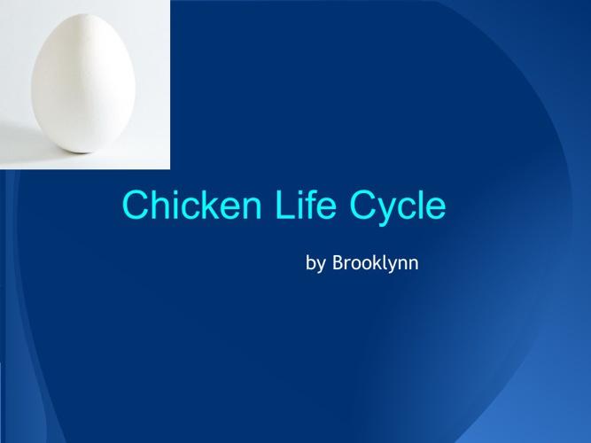 Brooklynn's Chicken Life Cycle