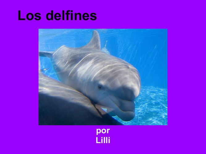 lilli defines