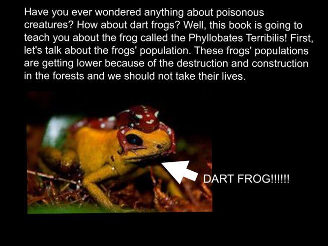 Dart Frogs (1)