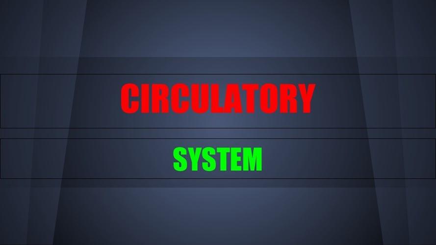 circulatory system Maddie
