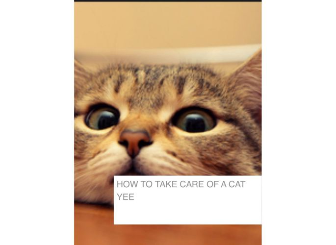 How to take care of a cat Yee