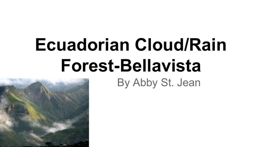 Ecuadorian Cloud forest