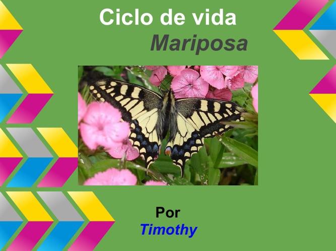 Timmy Mariposa