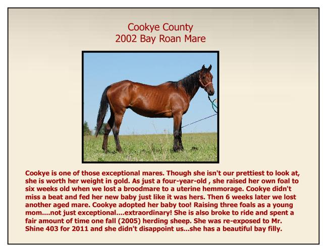 Quarter Horse Foal Archive