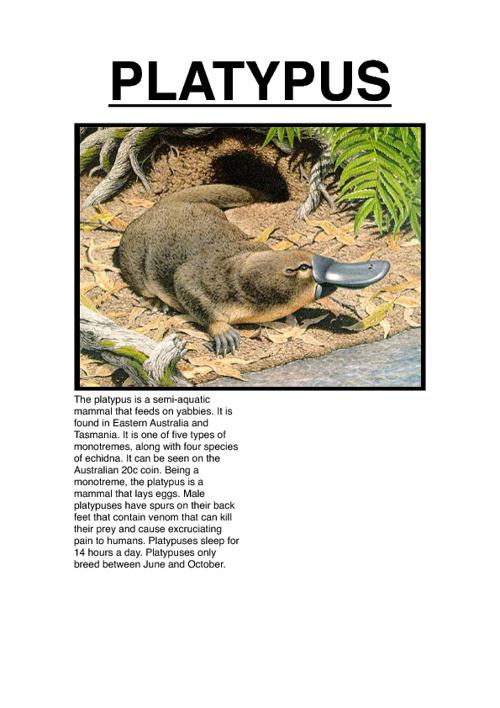 Operation: Platypus