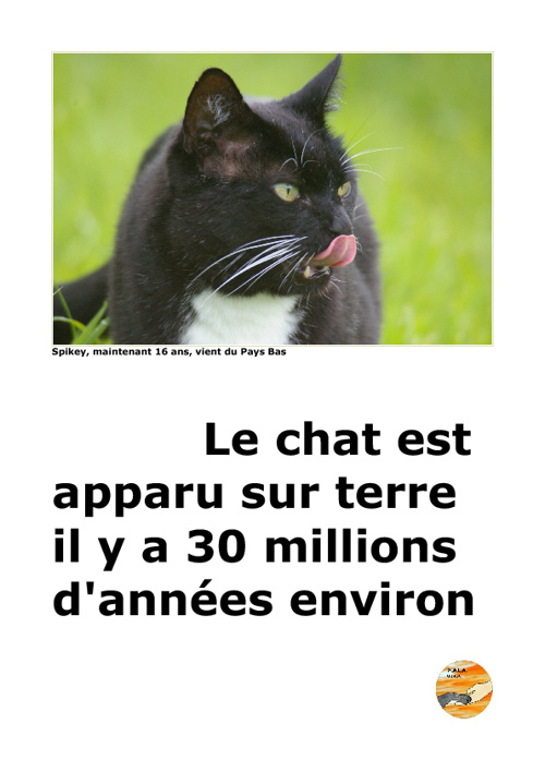 Copy of Exposition Les Chats
