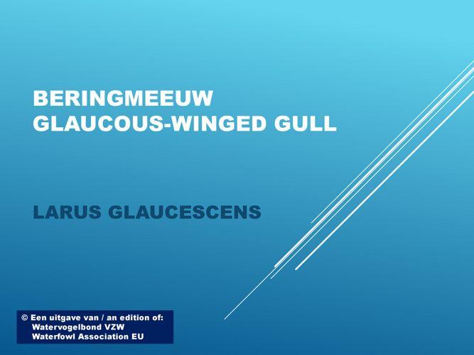 Beringmeeuw - Glaucous-winged gull