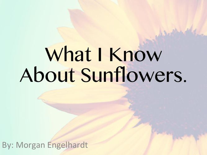 Sunflower Picture Book 2