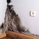 Mold Removal Nj