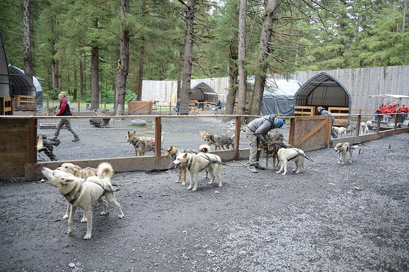 Alaska Facts And Information Fox World Travel