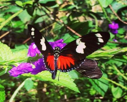 Rincon de la Vieja National Park 2