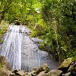 rainforest in Puerto Rico